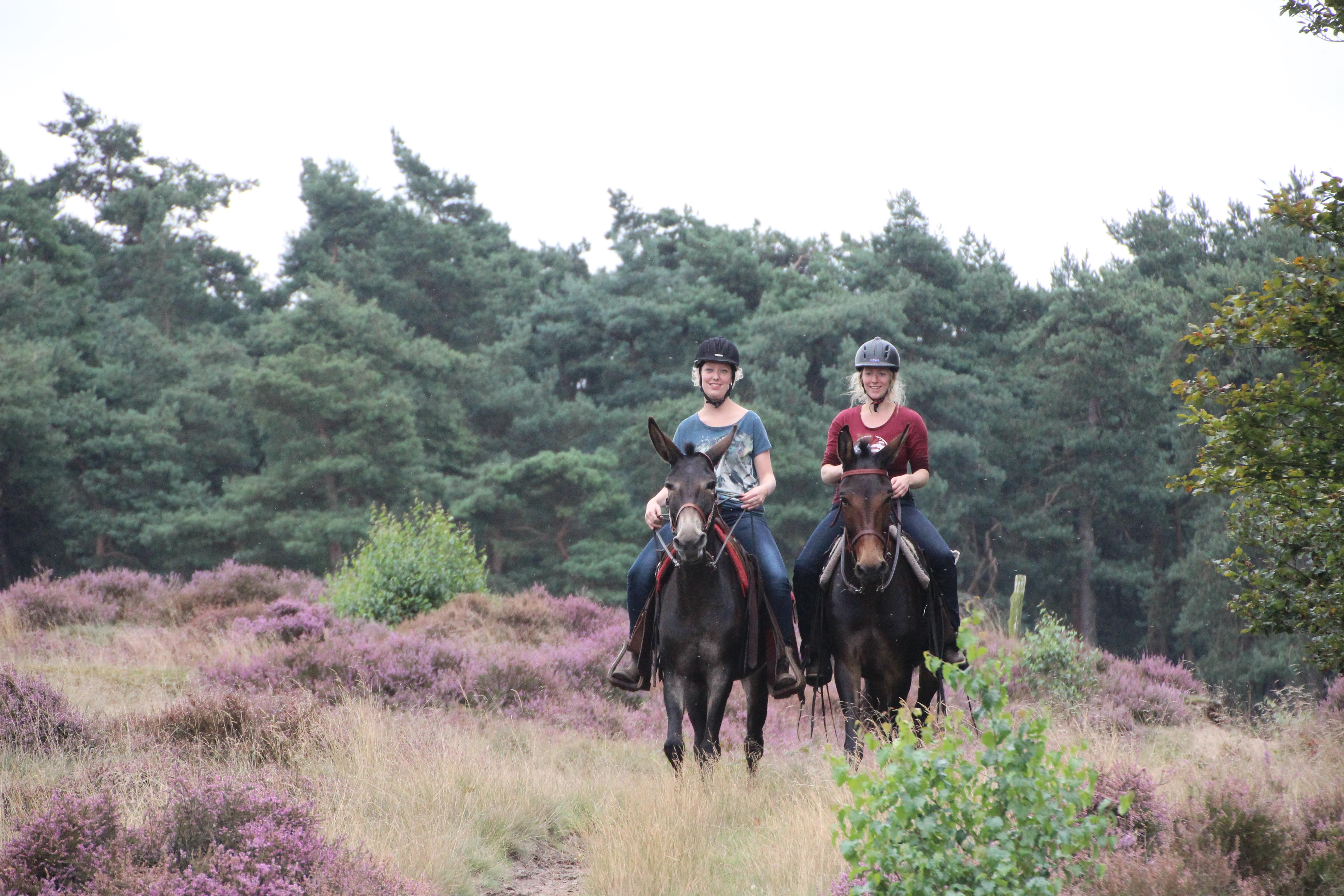 Buitenritten Te Paard Over De Veluwe Bij Westernstal The