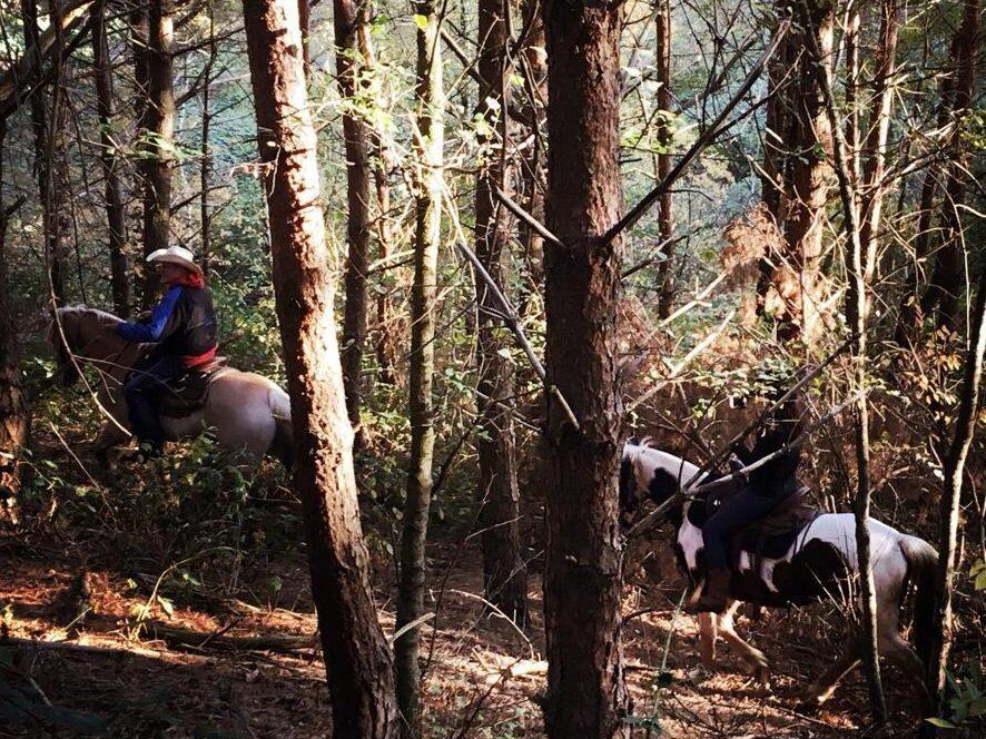 Paardrijden bos en heuvels