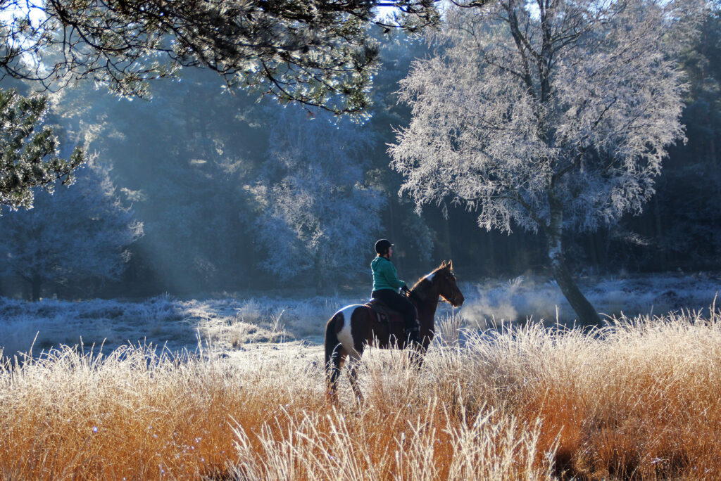 Westernrijden The Mill Ranch