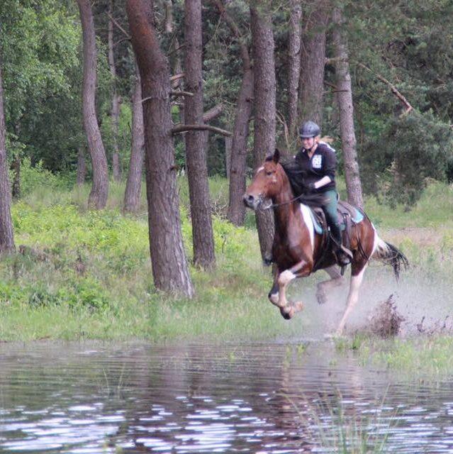 Galopperen door het water bij The Mill Ranch in Ede