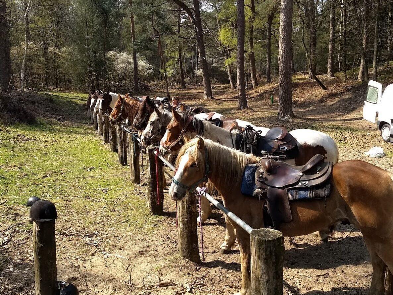 Buitenrit Hoge Veluwe: De dagtocht van The Mill Ranch gaat door het Nationale Park de Hoge Veluwe