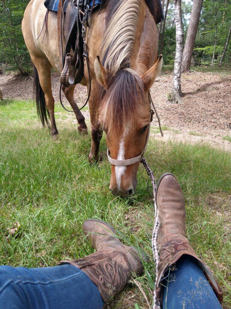 Pauze voor de paarden tijdens dagrit naar de Hoge Veluwe