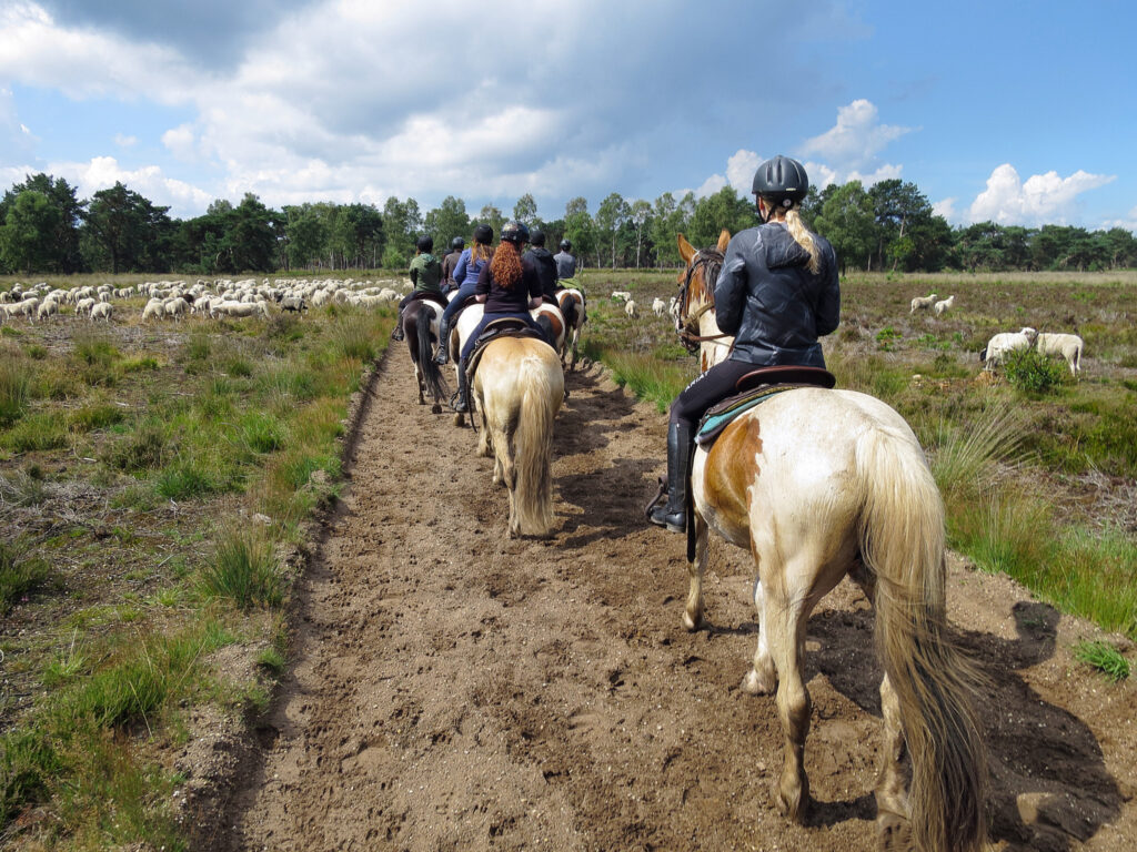 Paarden en schapen