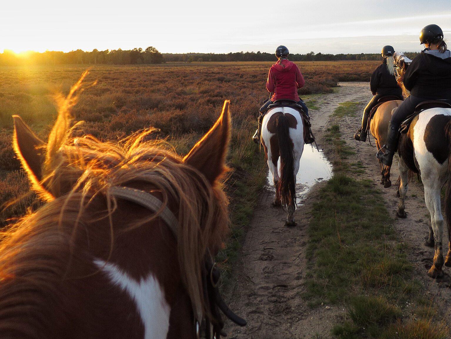 Groep ruiters van The Mill Ranch bij ondergaande zon tijdens een avondrit