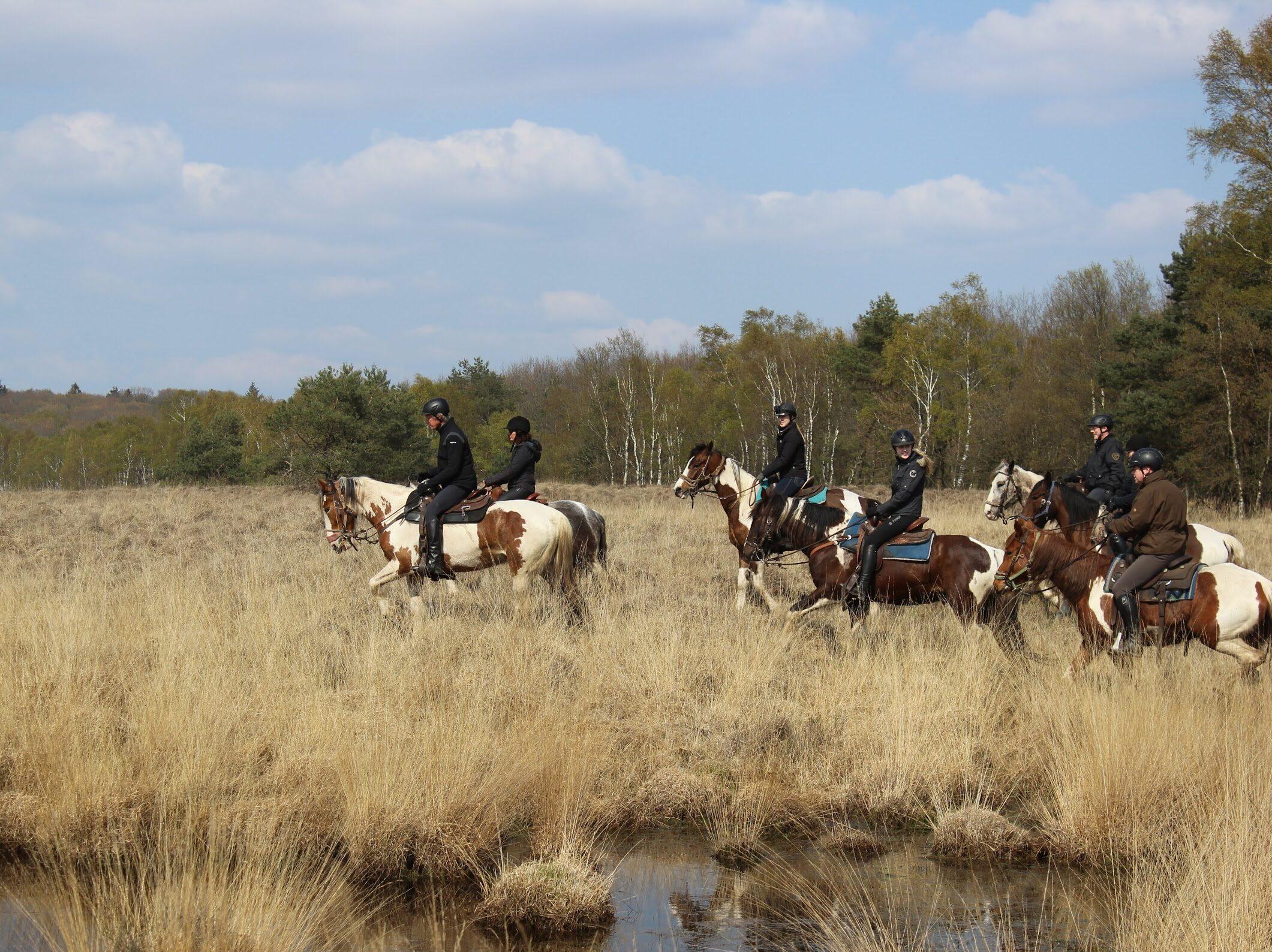 Buitenrijden op de Hoge Veluwe: De dagtocht van The Mill Ranch gaat door het Nationale Park de Hoge Veluwe