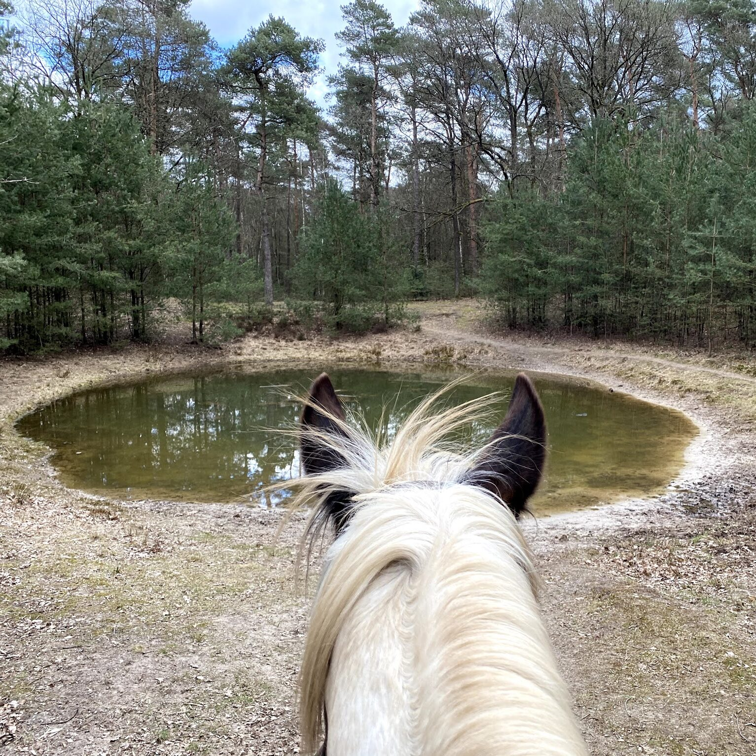 Bij The Mill Ranch kun je afwisselende buitenritten in western-stijl doen. Hier: Drinkpauze bij een waterplas in het bos.