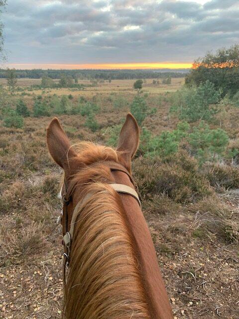 Mooi uitzichtpunt in de buurt van The Mill Ranch.
