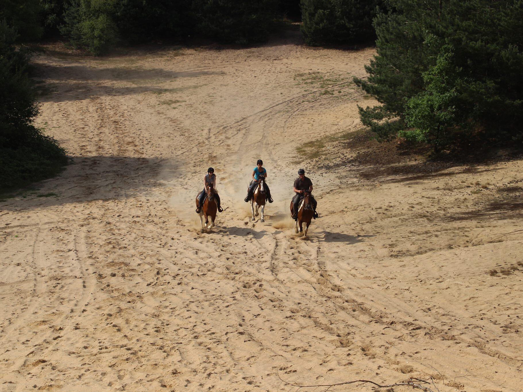 De zandrit van The Mill Ranch gaat over de Wekeromse zand