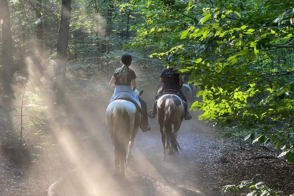 Paardrijden in het bos bij Ede: buitenritten bij The Mill Ranch