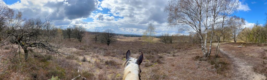 Panoramafoto Veluwe  genomen tijdens een buitenrit bij The Mill Ranch