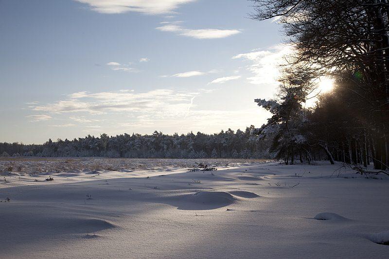 Sneeuw Veluwe