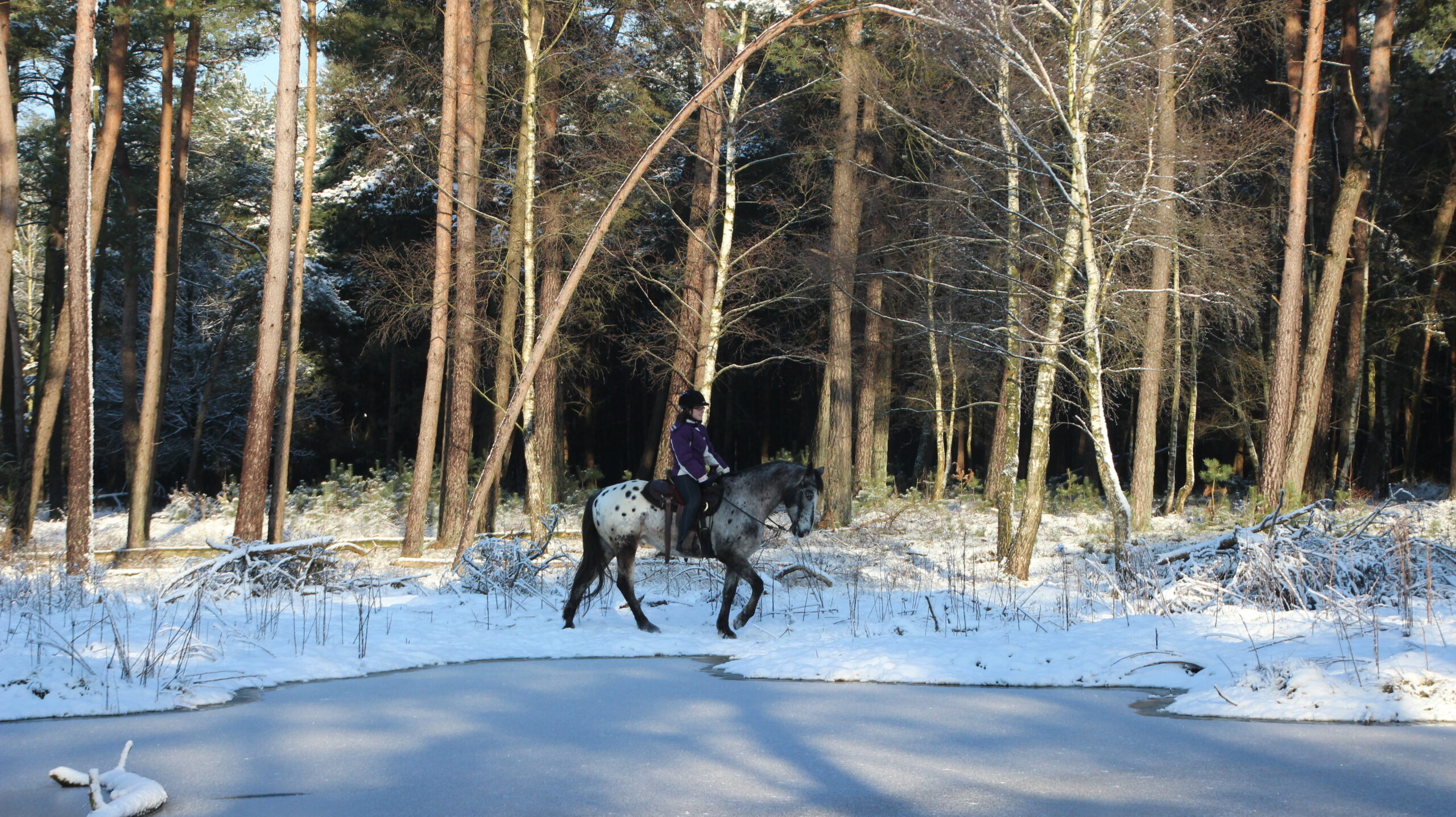 Bij westernstal The Mill Ranch kun je in de winter buitenritten in de sneeuw maken.