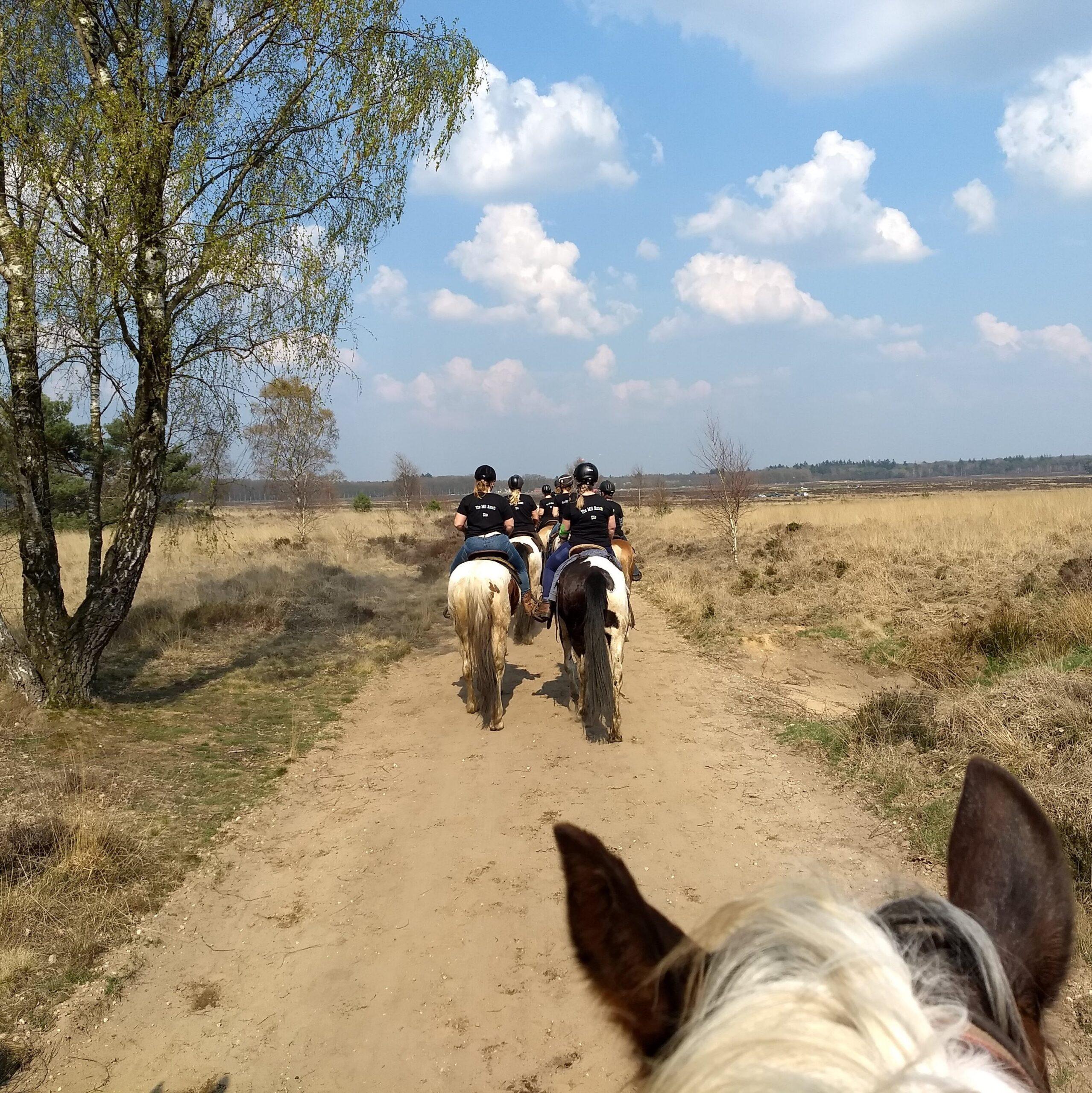Bij The Mill Ranch kun je afwisselende buitenritten in western-stijl doen. Hier: Zomerse buitenrit op de Ginkelse Heide