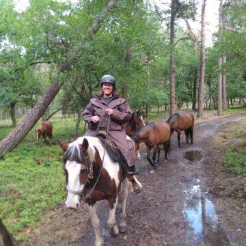 Wilde paarden bij de Mossel