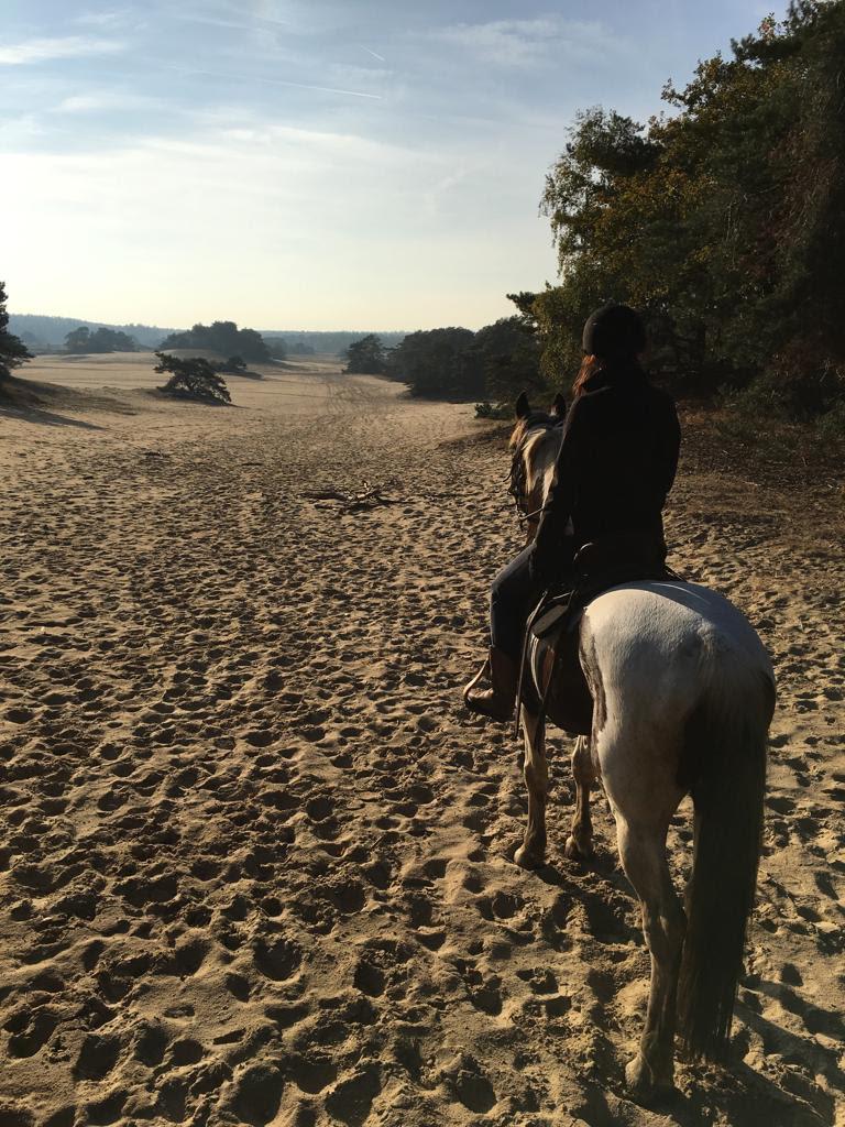 Paardrijden Wekeromse Zand
